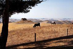 sicily landscape   Sicilian Landscape   Flickr - Photo Sharing!