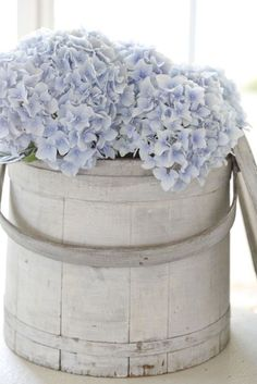 Hydrangeas in sap bucket ZsaZsa Bellagio