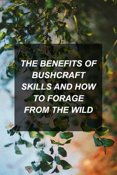 The Benefits of Bushcraft Skills and How To Forage From the Wild | Survival Shelf | Survival &...