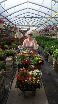 Isn't she lovely? Veg Garden, Garden Shop, Green Garden, Garden Nursery, Plant Nursery, Terrarium Workshop, Flower Shop Interiors, Isnt She Lovely, Greenhouse Plans