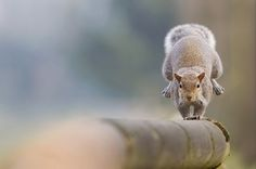 Photograph The vertical by Stefano Ronchi on 500px