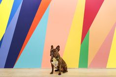 """Is this my new headshot? Odili Donald Odita """"The Velocity of Change,"""" 2015 in…"""