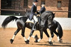 Pas de Deux with Friso fan S. & Tjalf 443 'Sport' #Friesian #Horse #Friesianhorse #stallion