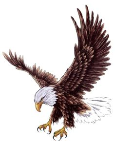 Eagle Outline Tattoo Design photo - 4