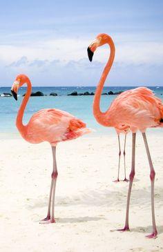 15 zomerse achtergronden voor je telefoon - Jennie from the Blog