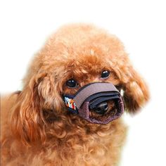 Hoopet Adjustable Dog Muzzle >>> Quickly view this special dog product, click the image : Dog muzzle