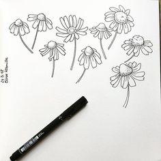 Calling spring No 5 - Chamomile, such a beautiful and powerful flower   #inkdrawing #drawing #sketch #sketching #sketchbook #sketchdaily #surfacepatterndesign #stationerydesign #penandink #instaart #instaartist #kamille #chamomile #chamomiletea #flower #flowerdrawing #spring #seawhiteofbrighton #unipin