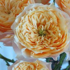 ~The Beatrice rose is the first yellow-cut rose from David Austin Roses. With in full-swing, the buttery yellow petals of this rose are perfect for List Of Flowers, Love Flowers, Wedding Flowers, Most Beautiful Flowers, Beautiful Gardens, Ronsard Rose, Every Rose, Cut Flower Garden, David Austin Roses