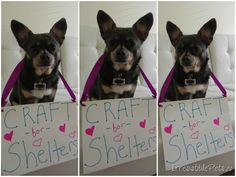 Craft For Shelters - Irresistible Pets