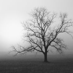 Nicholas Bell - Black and white photography / trees / landscape photography