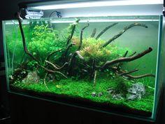 Layout par Romain 44. #aquascaping #fishtank #aquarium