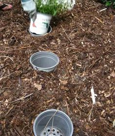 Plant Pots  Take valuable time off your gardening routine with this clever technique for potting plants. To make: Florida Friendly Plants