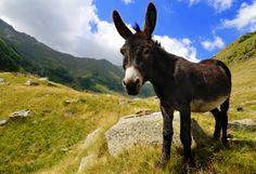 42 Beste Afbeeldingen Van Ezel Paarden Dieren En