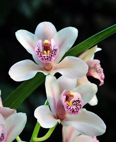 ORCHIDS | ... , Clematis, Orchids and More | Northwest Flower & Garden Show - Blog