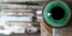 Glass Eyes Online - Bird, Mammal & Reptile eyes - Doll eyes, Teddy Bear eyes - Human eyes