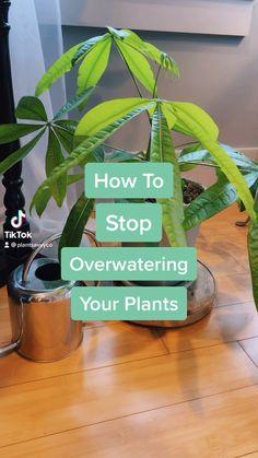 Planting Succulents, Garden Plants, Indoor Plants, Planting Flowers, Inside Plants, Cool Plants, Household Plants, Growing Plants Indoors, Plant Aesthetic
