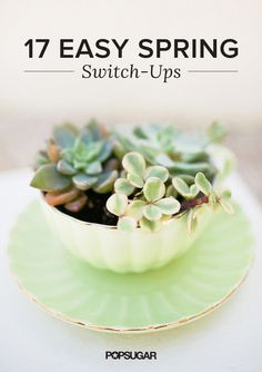 Plant succulents in a pretty teacup and saucer for an unexpected twist on Spring decorating