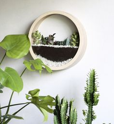 Items similar to Large Succulent Wall Planter, Air Plant Hanger on Etsy Succulent Wall Planter, Air Plant Terrarium, Planters, Best Interior Design, Interior And Exterior, Plant Bags, Composition, White Plants, Eucalyptus Leaves