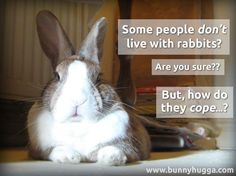Flicka shares her favourite 10 photos from 2013 Funny Bunnies, Baby Bunnies, Cute Bunny, Bunny Rabbits, Dwarf Bunnies, Adopt A Bunny, Bunny Rescue, Benny And Joon, Bunny Quotes