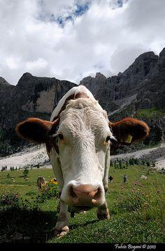 Cow Bells in the Italian Alps