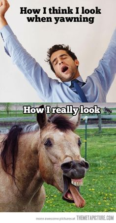 Hahaha!... the more I stare at the horse the more unexpected giggles come out!