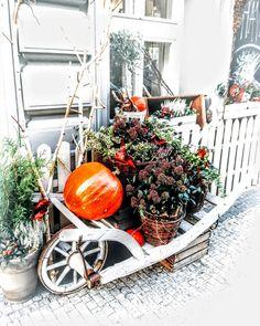Autumn vibes in Prague  #praha #praha #prague #praguelife #liveinprague #praguel... #autumn #autumndecor #autumndecoration #autumndecorations #decoration #decorations #dekorace #dyne #karlin #kvetinarstvi #liveinprague #livinginprague #livinginpraha #lovingprague #lovingpraha #milujemeprahu #podzim #podzimni #podzimnidekorace #prague #praguelife #pragueliving #praha #praha❤️ #venkovnidekorace #vibes #zitvpraze #zivotvpraze