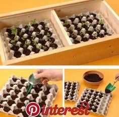 DIY seedbed with egg tray Vegetable Garden Design, Veg Garden, Garden Beds, Succulent Gardening, Succulents Garden, Gardening Tips, Preschool Garden, Bottle Garden, Hydroponics