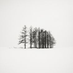 trees | LE CONTAINER