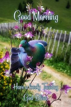 Tuesday Quotes Good Morning, Good Morning Good Night, Good Morning Wishes, Beautiful Romantic Pictures, Tuesday Greetings, Days Of Week, Gods Love, Worship, Blessed