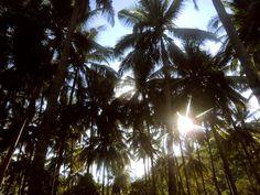 6/30(木)バリ島ウブドのお天気は晴れ。室内温度27.6℃、湿度82%。雨の多い日が続きましたが、今日は良い天気!キラキラの太陽が昇ってきました