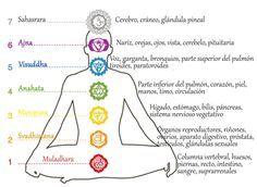 LOS CHAKRAS. Existe una estrecha relación entre Reiki y Chakras: para empezar, las activaciones sólo son posibles con la apertura de los Chakras. Con las...