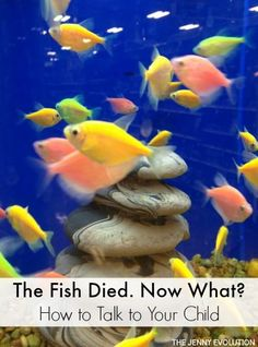 The Fish Died. How to Talk To Your Child About the Death of a Pet