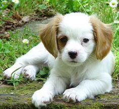 Just too cute...