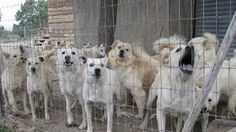 Αγοραπωλησίες ζώων / Beendigung von Züchtungen und den Verkauf von Tieren in Zypern / Stop Breeding and selling of Animals in Cyprus!!  https://www.change.org/p/%CE%B1%CF%81%CF%87%CE%B7%CE%B3%CF%8C-%CF%84%CE%B7%CF%82-%CE%B1%CF%83%CF%84%CF%85%CE%BD%CE%BF%CE%BC%CE%AF%CE%B1%CF%82-chief-of-police-%CE%B1%CE%B3%CE%BF%CF%81%CE%B1%CF%80%CF%89%CE%BB%CE%B7%CF%83%CE%AF%CE%B5%CF%82-%CE%B6%CF%8E%CF%89%CE%BD-breeding-selling-of-animals