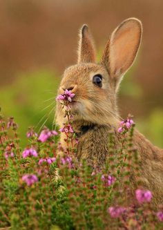 There are many other species of rabbit, and these, along with pikas and hares, make up the order Lagomorpha. a young rabbit is a kitten or kit. Cute Creatures, Beautiful Creatures, Animals Beautiful, Animals And Pets, Baby Animals, Cute Animals, Tier Fotos, Hamsters, Fauna