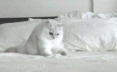 Gatos haciendo cosas #6196938