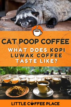 """Wait, people actually drink cat poop coffee? Kopi Luwak, vulgarly known as """"cat shit coffee"""", is not a specific type of coffee, not a new type of coffee plant, nor is it a single origin that has a different taste than most. Its fame comes from how it is processed. Find out everything you never wanted to know about this infamous delicacy, and how it actually tastes here! #littlecoffeeplace #kopiluwak #catshitcoffee #catpoopcoffee #coffee"""