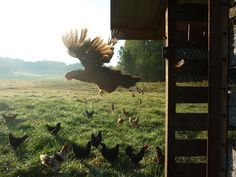 Longest Acres Blog: good morning