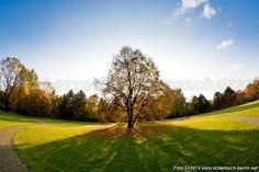 Bilderbuch Berlin - Einsamer Baum