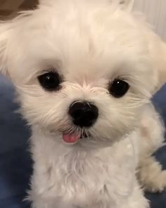 Ten Hairy Dog Facts That You Do Not Know About! Do you consider you realize everything about our canine companions? Take a look at these 10 surprising facts about dogs. Cute Little Puppies, Cute Dogs And Puppies, Cute Little Animals, Baby Dogs, Cute Funny Animals, Funny Dogs, Doggies, Funny Puppies, Pet Dogs