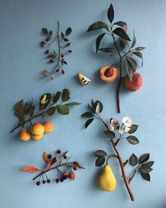 amazing paper fruit and foliage by Ann Wood Fotografie Hacks, Paper Fruit, Ann Wood, Jolie Photo, Botany, Paper Flowers, Art Flowers, Flowers Nature, Exotic Flowers