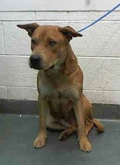 RICK (A1687681)I am a male tan Terrier mix. The shelter staff think I am about 2 years old. I was found as a stray and I may be available for adoption on 03/29/2015. Miami Dade https://www.facebook.com/urgentdogsofmiami/photos/pb.191859757515102.-2207520000.1427146110./949796348388102/?type=3&theater