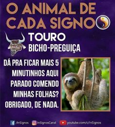 Read Animal De Cada Signo from the story Signos by Sexytaekookv (𝙶𝙰𝚃𝙸𝙽𝙷𝙰) with reads. Mbti, Zodiac Signs, Astrology, Cancer, Geek Stuff, Humor, Wattpad, Taurus, Animals