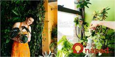 Chcete aby vaše rastliny kvitli rýchlejšie a boli krajšie? Flower Beds, Horticulture, Potted Plants, Houseplants, Flora, Patio, Summer Dresses, Rarity, Organizing