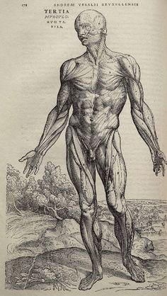 Vesalius_Fabrica_p178.jpg (1029×1823)    Death of books - 4