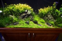 Aquascape (Driftwood) suggestions [PICS]