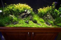 planted aquarium #aquascape