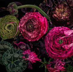 Flora Botanica, Different Forms Of Art, Flower Arrangements Simple, Floral Artwork, Botany, Organic Gardening, House Plants, Flower Power, Paper Flowers