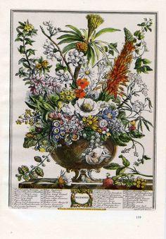 Furber December Birthday Flowers Art Print FLOWER ARRANGEMENT Antique Botanical Book Plate