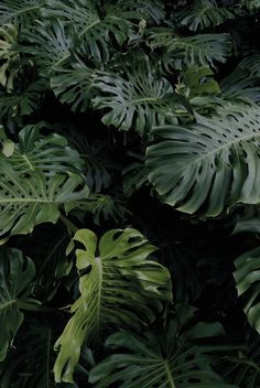 """Christian Neuenschwander - """"Florida Green"""" for Zukunft October Issue Green Plants, Tropical Plants, Plant Aesthetic, Plants Are Friends, Bohemian House, Bohemian Style, Green Wallpaper, Tumblr Photography, Green Life"""